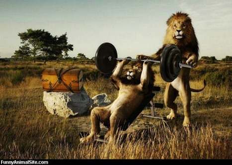 Lions_Working_Out