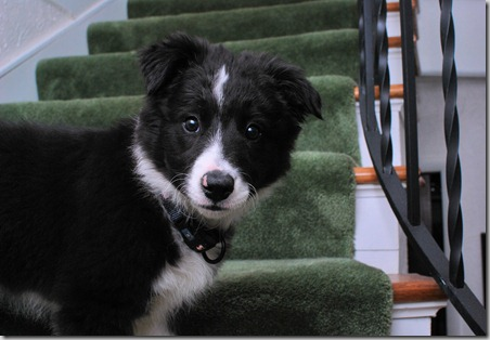 Zoey Stairs5