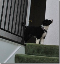 Zoey Stairs7