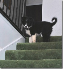 Zoey Stairs8