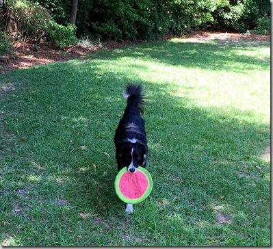 zoey frisbee play