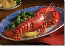 live_maine_lobster