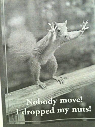 Squirrel no nuts