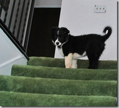 Zoey Stairs4