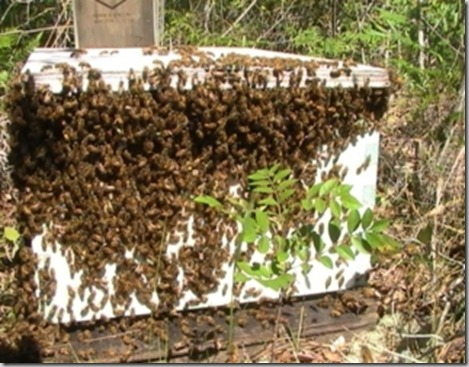 bees-on-box