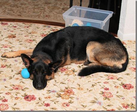 Dog tired2