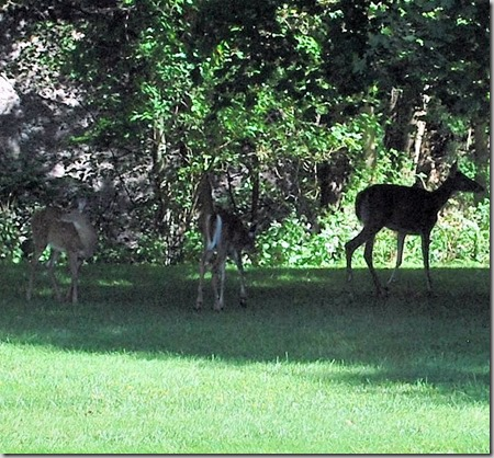 Visiting Herd6