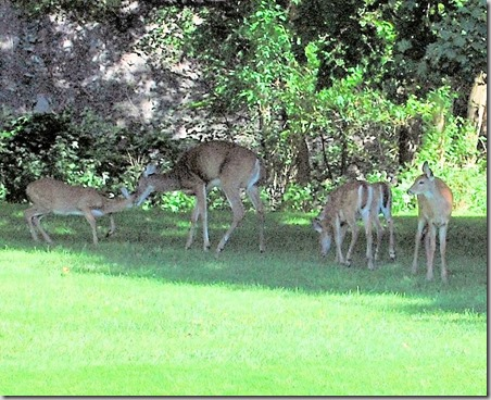 Visiting Herd9