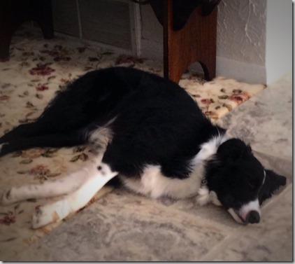 zoey sleeping after long run