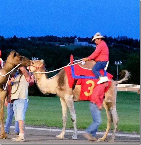 Camel rider on