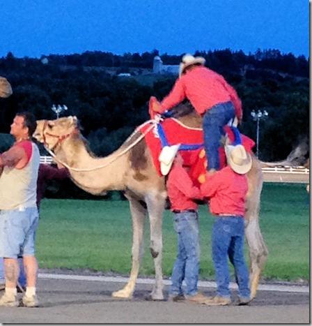 Camel rider up