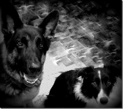 Shane and Zoey BW