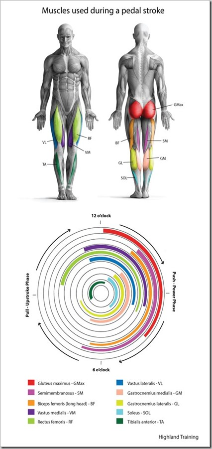 Power-Pedal-Muscles-BlogReady