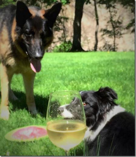 wine dogs 2